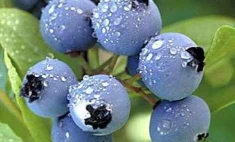 亮眼蓝莓农庄(户县店)