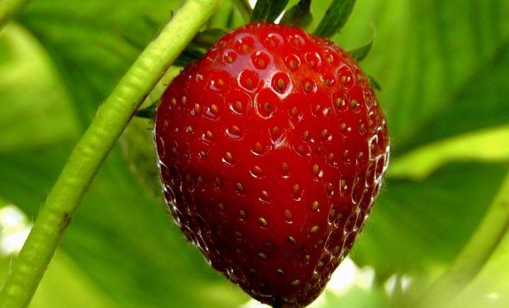 天天草莓 - 大图