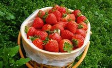 友旺草莓采摘1斤