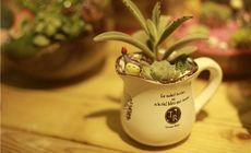 抉择DIY植物代金券