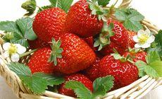 杰合鹏草莓采摘