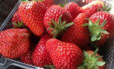 杰合鹏草莓采摘家庭券