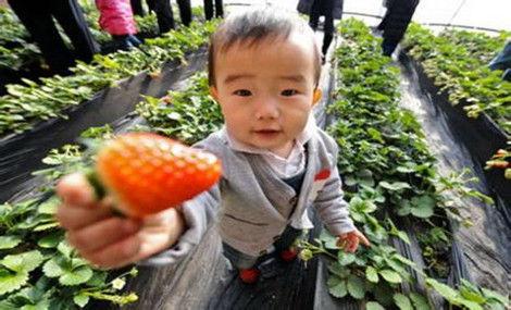 天乐草莓园