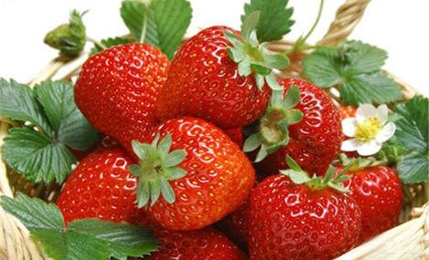 家家福奶油草莓采摘园