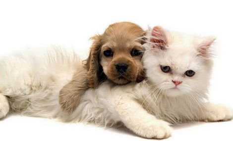 贵宝宝宠物