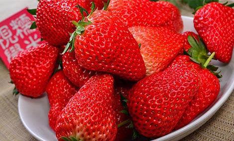 老张草莓采摘园