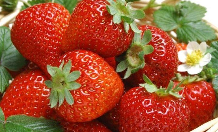 小郝草莓采摘园