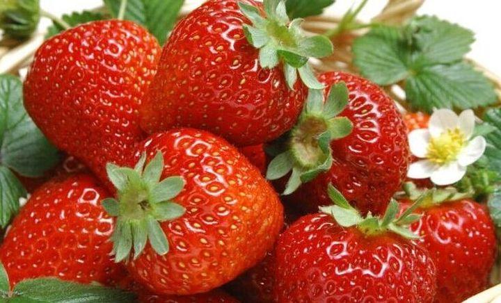 卫红草莓采摘园