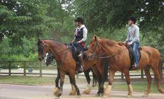 贵妇野外骑马奴