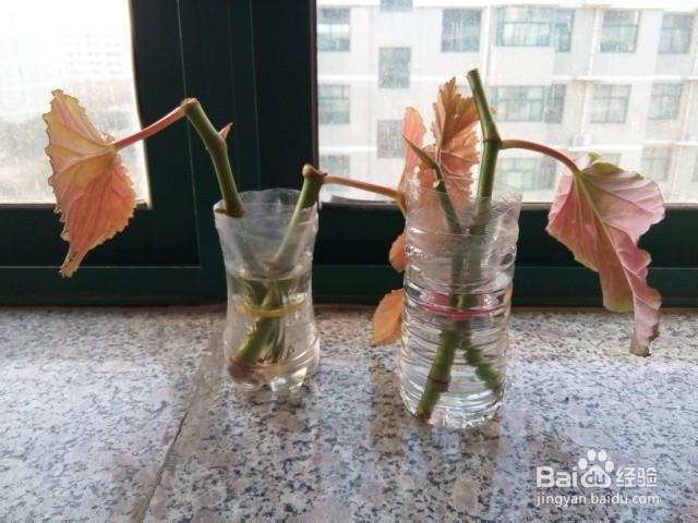 手工DIY:变废为宝:[3]矿泉水瓶变身简洁花瓶