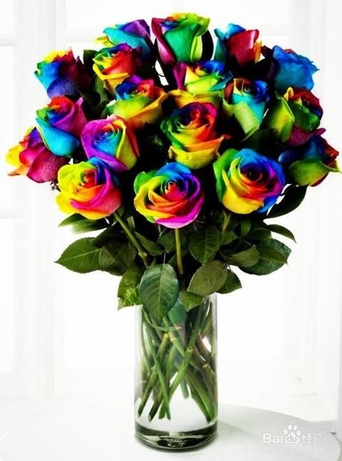彩色玫瑰花语是什么