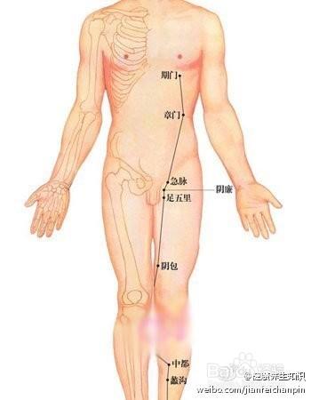 腿部肝胆脾胃经络图