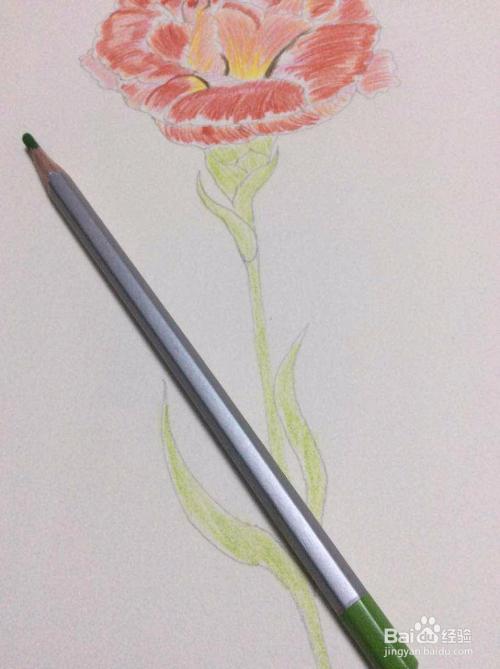 手绘 如何用色铅笔画一支送妈妈的康乃馨