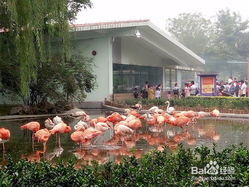 石家庄动物园一日游旅游攻略