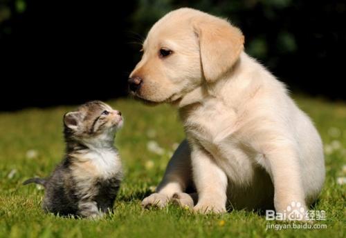 猫狗和平共处的技巧