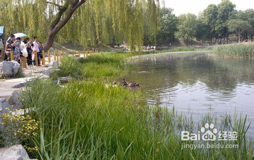 北京圆明园的旅游攻略