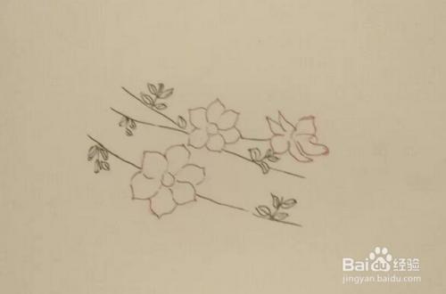 简笔画报花名 手绘 迎春花 画法