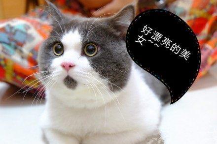 猫迷茫表情包分享展示图片