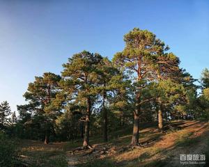 红花尔基森林公园图片 红花尔基森林公园风景图片 红花尔基森林公园