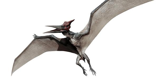 作为最早登陆银幕的恐龙,无齿翼龙作是飞行恐龙的标志,在包括《金刚