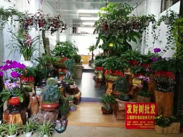 都市喝彩园林花卉场