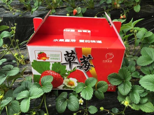 草莓帮采摘种植园