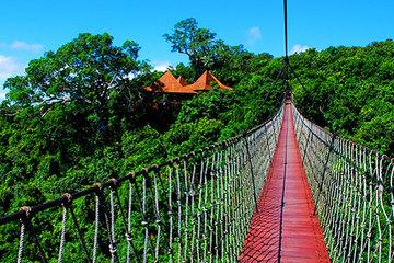 三亚亚龙湾热带天堂森林公园 双人门票图片