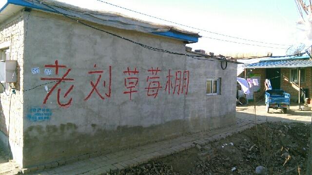 西官庄草莓采摘园(小汤山店)