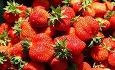 林海雪原草莓节采摘预定中心