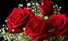 杜拉克丝玫瑰花束