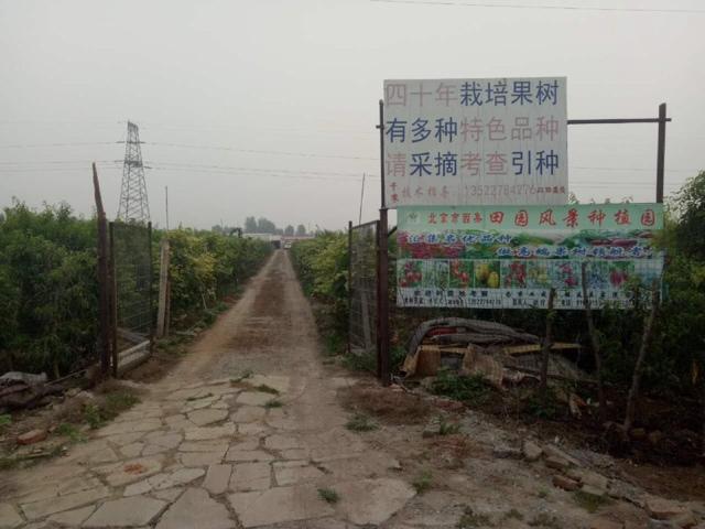 西集田园风景种植园