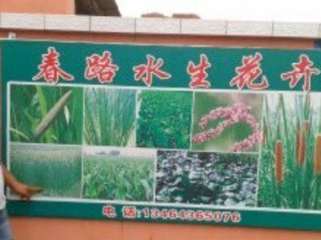 春路水生花卉