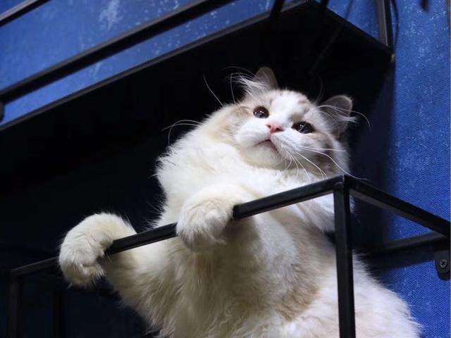 淘猫猫宠物家园