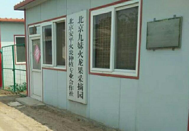 北京九妹火龙果采摘园