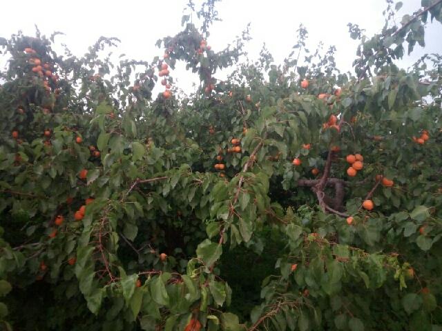 创投采摘园草莓采摘