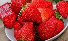 老张草莓种植园