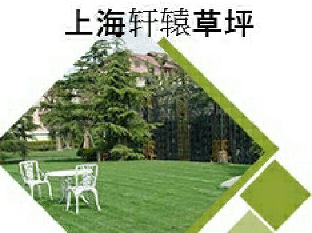 轩辕草坪工程