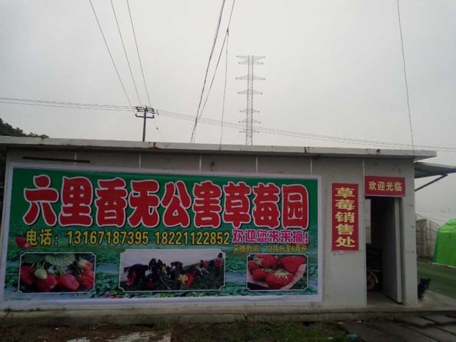 六里香草莓园(张堰镇店)