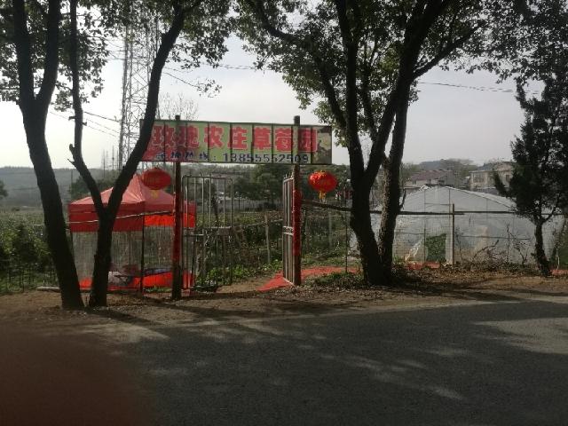 玫瑰农庄草莓园