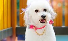 建文宠物美容师培训