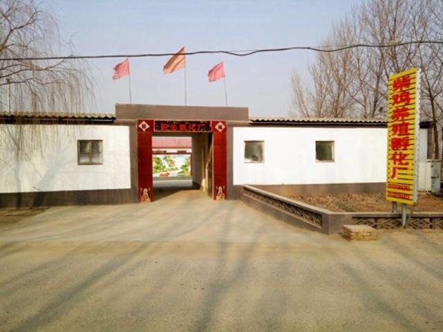 阳柴鸡养殖孵化厂