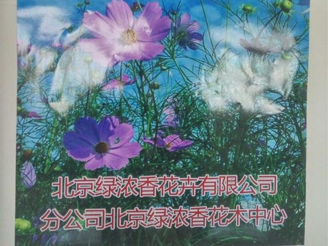 绿浓香花卉