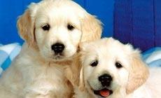 北方犬业宠物用品(西环南路店)