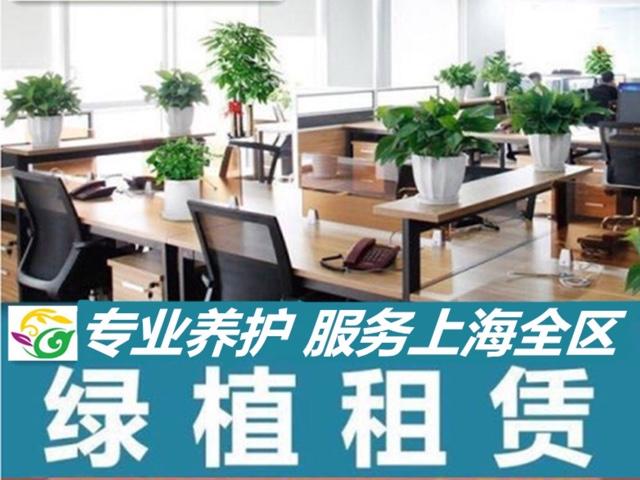 上海乐萱园艺绿植租赁植物租摆公司