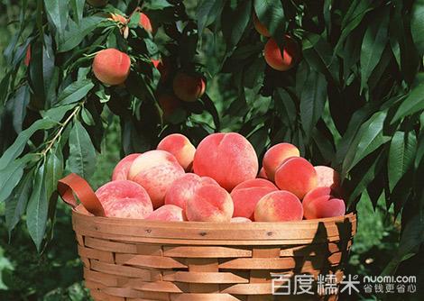 瑞龙果树种植专业合作社