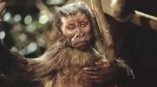 猴赛雷!盘点好莱坞影视作品的猴子们