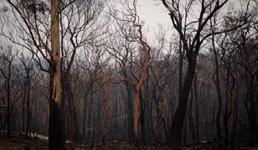 澳大利亚经历水火两重天