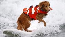 狗狗也疯狂:那些热爱极限运动的汪星人