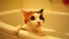 """""""猫奴""""和主子一起共浴 还要给它揉脸颊好"""