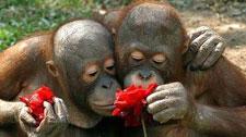 捕捉甜美的气息!动物嗅花组图走红国外网络
